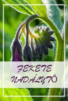 Medicinal Plants, Alternative Medicine, Doterra, Cactus Plants, Health And Beauty, Herbalism, Medical, Herbs, Wellness
