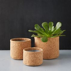 Cork Pots Ikea Cork, Cork, Plant Pot Covers, Large Plant Pots, Pot, Outdoor Garden Furniture, Diy Planters, Large Plants, Wood Plant Stand