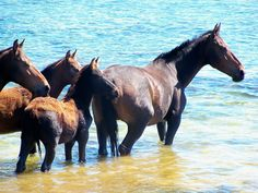 Wild Horses of the Bot River Lagoon, Hermanus District, South Africa. Photo by Marlize Stander