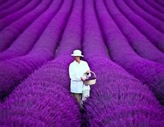 Lady in field of bright lavender