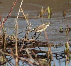 In the marsh