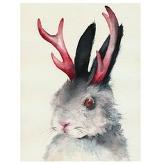 Jack, Portrait of a Jackalope by Amber Alexander! I would love this illustration, it is so beautiful!! $18