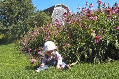 <p>À la Val'Heureuse, on pratique l'herboristerie artisanale.</p>