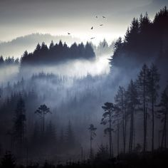 Photo Scrap: Above the pines... by David Mould, via 500px