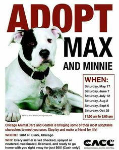 CACC #adoptable pets this Saturday in #Chicago