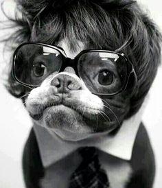 French Bulldog. hahahahahah yes