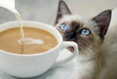 I'll take some coffee with my Latte!