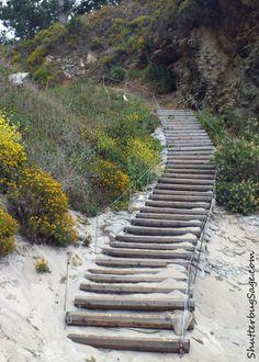 China Beach, Point Lobos, California