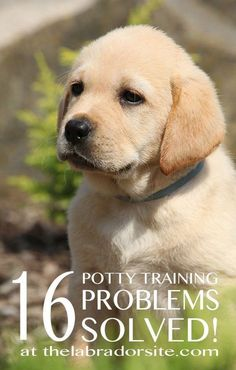 Puppy Potty Training -- The One And Only Dog Trainers Bible *** Continue with the details at the image link. #PottyTrainingPuppy #DogObedienceTipsandAdvice