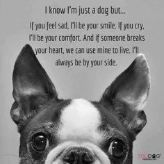 Love this quote. And it has a Boston terrier on it.