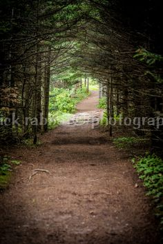 Path in the Woods Photo Ready to Ship 5x7 With White Borders Fine Art Photography Relaxing Nature Perspective Decor Green Brown Meditation