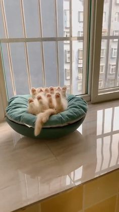 Cute Baby Cats, Cute Cats And Kittens, Cute Little Animals, Cute Funny Animals, Kittens Cutest, Funny Cats, Cute Animal Videos, Cute Animal Pictures, Cute Creatures