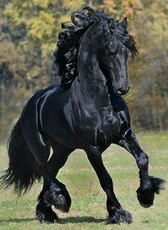 Paula costa paulafcosta no pinterest artesanato animais lindos cavalos selvagens cavalos pretos cavalo frsio cavalos bonitos cavalo shire fotografia do cavalo animais outlander fandeluxe Choice Image
