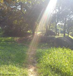 Réstia por Inês de Barros Parque Campolim - Sorocaba/SP - julho/2013