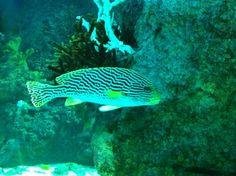 Sea Aquarium, Singapore, Bird, Pets, Animals, Animales, Animaux, Birds, Animal