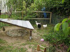 Bild 10 von 11 Chicken Lady, Chicken Runs, Chicken Shelter, The Barnyard, Chicken Coop Designs, Raising Chickens, Green Life, Coops, Hens