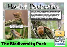 Learn about the amazing variety of life on Earth with our Biodiversity resources! This pack includes a topic guide (in PDF, Powerpoint and video formats), printable activities to try, and display resources to decorate your learning environment. Science Curriculum, Science Resources, Teacher Resources, Activities, Teaching Packs, Habitat Destruction, Learning Environments, Geography, Habitats