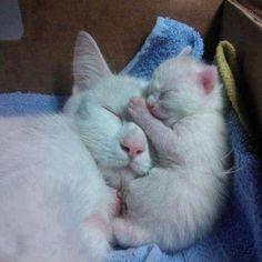 Mama & kitten <3