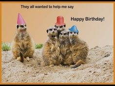 : Cute Happy Birthday Card With Fun Grumpy Cat Vector Image Images Cats. Hamster Cartoon Stock 123664196 A Picture Of. Happy Birthday Animals Funny, Cute Happy Birthday, Cool Birthday Cards, Happy Birthday Video, Homemade Birthday Cards, Happy Birthday Pictures, Animal Birthday, Birthday Wishes, Funny Animals