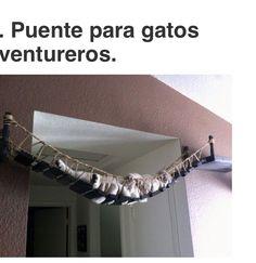 Puente para gatos ❤️