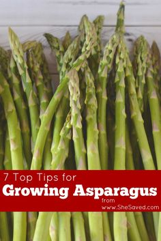 7 Top Tips for Growing Asparagus Asparagus makes a yummy side dish, often sautéed with a little butter or grilled for a steak and potato plate. If you want to enjoy the vegetable straight from Cold Climate Gardening, Organic Gardening, Gardening Tips, Vegetable Gardening, Sustainable Gardening, Urban Gardening, Urban Farming, Organic Vegetables, Growing Vegetables