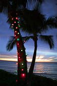 I think I could live with seeing a decorated Palm for Christmas! ;)