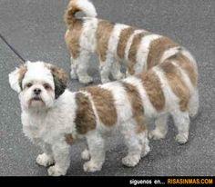 Nueva raza de perro ciempiés.