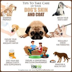 Tips to Take Care of Your Dogs Skin and Coat . - Lovely Pets World Puppy Care, Pet Care, Care Care, Coconut Oil Dogs Skin, Pet Supplements, Healthy Pets, Dog Care Tips, Dog Coats, Pet Health