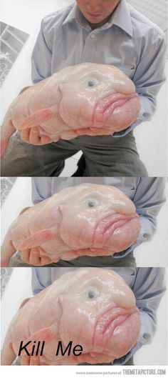 The Blobfish, a rare sea creature… Veeeeeetoing this little bastard. Deep Sea Creatures, Weird Creatures, Ocean Monsters, Animals And Pets, Cute Animals, Funny Animals, Blobfish, Axolotl, Fishing World