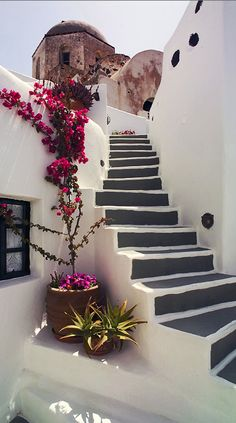 Blooming bougainvillea in a Santorini alley ~ Santorini, Greece
