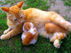 Ginger cat and her kittens