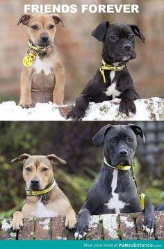 BFFs! #puppylove