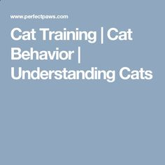 Do you have a cat that appears to be a little on the chunky side? Does your cat feel heavy and is hard to lift? There are many fat cats out there that could use Cat Behavior Problems, Cat Care Tips, Fat Cats, Training Tips, Cool Cats, Pets, Animals And Pets