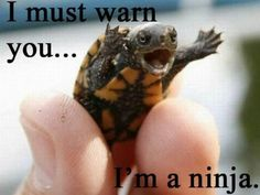 so cute....... ninja turtle!