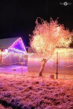 fot. Adam Duraj #winter #tree #lights