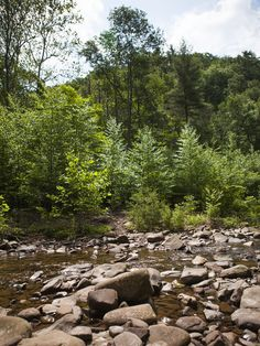 fallen trees in river beds - Google Search