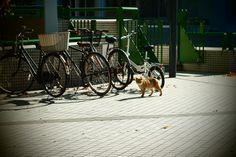 Walk cat