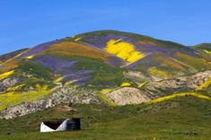 www.countryliving.com life travel news a42517 california-super-bloom ?zoomable