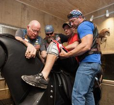 'Horse therapy' helps wounded vets