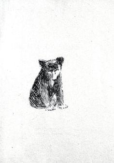 Animal - Bear - Baby bear drawing 1