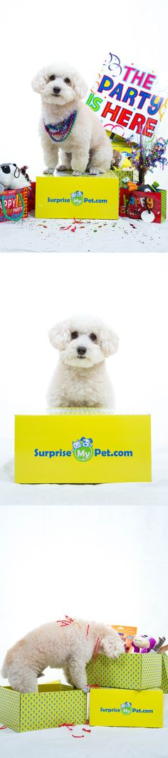 Surprise My Pet monthly subscription- each month your dog receives products and presents in the mail! Proceeds help support other animals in need! I have already placed my order for my pup! Everyone should do the same, our pups need loving too!