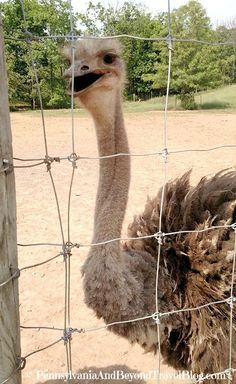 Pennsylvania & Beyond Travel Blog: Visiting the Lake Tobias Wildlife Park in Halifax PA - One of the best zoos and wildlife parks in Central Pennsylvania. Love the petty zoo which features farm animals for the kids to feed and pet.