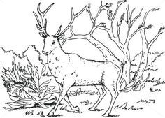 Set 10 Planse de colorat cu Animale de padure | Fise de lucru - gradinita Sheep, Moose Art, Creatures, Horses, Blog, Blogging, Horse