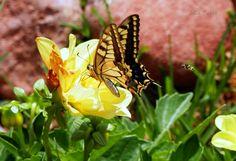 La Tabla en El Jardín: Muchas flores y alguna mariposa
