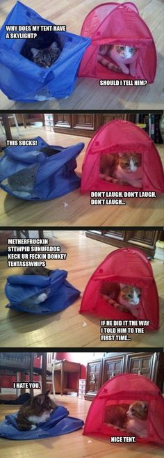 Two Cats That Treat Their Tent Differently.
