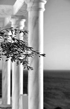 ❥‿↗⁀simply-beautiful-world Olive Tree in Mykonos, Greece Santorini, Mykonos Greece, Crete Greece, Athens Greece, Beautiful World, Beautiful Places, Simply Beautiful, Mykonos Island, Albania