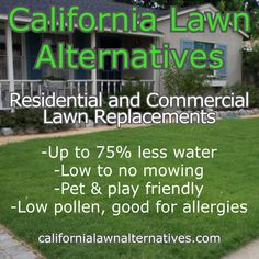 UC Verde, Kurapia, and Ruschia 'Nana' -Up to less water -Low to mowing -Pet & play friendly -Low pollen, good for allergies Grass Allergy, Drought Tolerant Grass, Fake Lawn, No Mow Grass, Erosion Control, Seed Germination, Small White Flowers, Weed Seeds, Types Of Soil