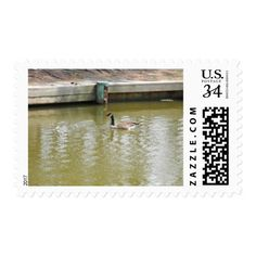 Canada Goose Swimming Postage