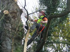 Our main areas of focus for our tree removal services in the Northern Beaches and North Shore area, but we offer our services in any surrounding areas in Sydney.