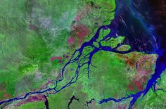 Amazon River exhales virtually all carbon taken up by rain forest: Until recently people believed much of the rain forest's carbon floated down the Amazon River and ended up deep in the ocean. Research showed a decade ago that rivers exhale huge amounts of carbon dioxide, though it left open the question of how that was possible. A new study resolves the conundrum, proving that woody plant matter is almost completely digested by bacteria living in the Amazon River.